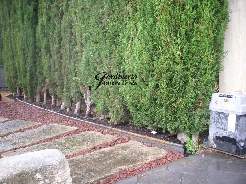 creacion_jardines-1
