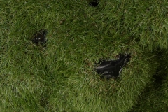 artificial-grass-animals_001