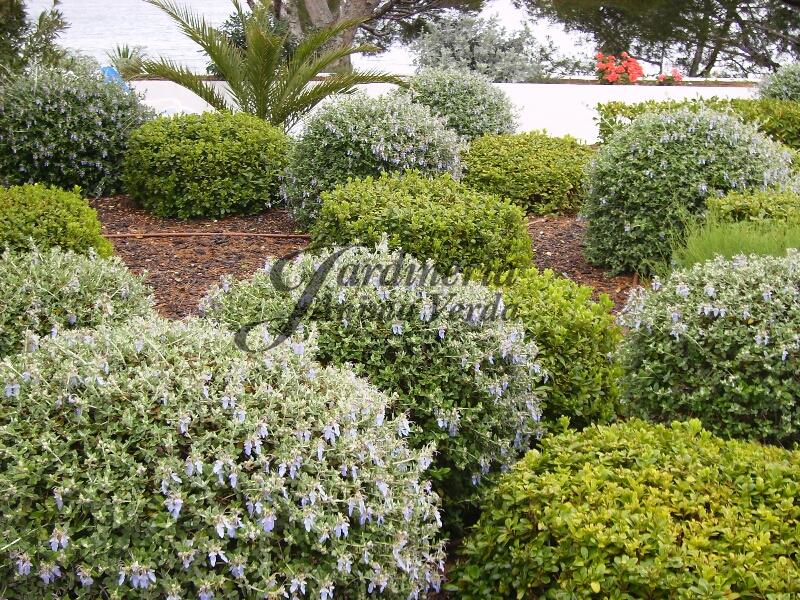 Creaci n de jardines jardineria nima verda for Jardineria la noguera
